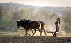 A Glance My Way (miche11) Tags: ohio horse spring farm amish dust planting sons thechallengefactory