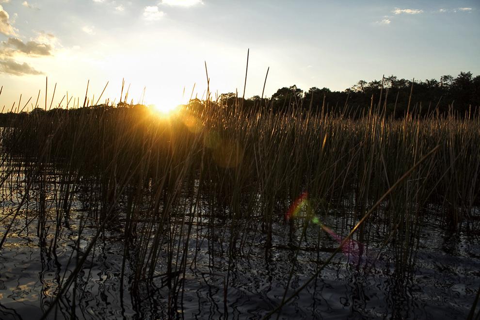 Juncos sobresalen cerca de la orilla mientra sel sol se pone en Laguna Blanca. (Santa Rosa del Aguaray, San Pedro, Paraguay - Tetsu Espósito)