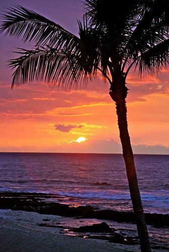 [フリー画像] 自然・風景, 海, 夕日・夕焼け・日没, 樹木, ビーチ・砂浜, やしの木, ハワイ州, 201004291900