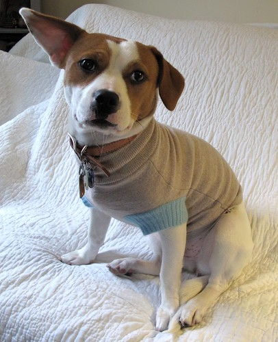 Resweater dog sweater refashion tutorial 1