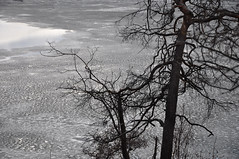 Nature in black and white (Poupetta) Tags: frozen thinice helsinkifinland bwlike tlbay