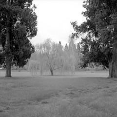 (Andrs Medina) Tags: trees 120 6x6 film nature fairytale dreams vegetation tmax100 100tmx bronicaectl