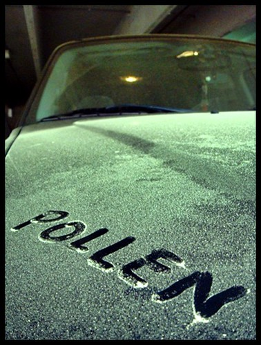 Pollen covered car