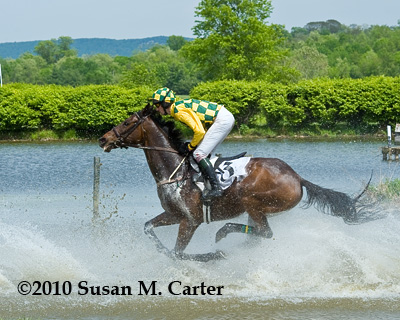 The Whacker runs through the water in a steeplechase race at the Virginia Gold Cup
