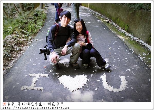 20100501夢幻桐花步道_035