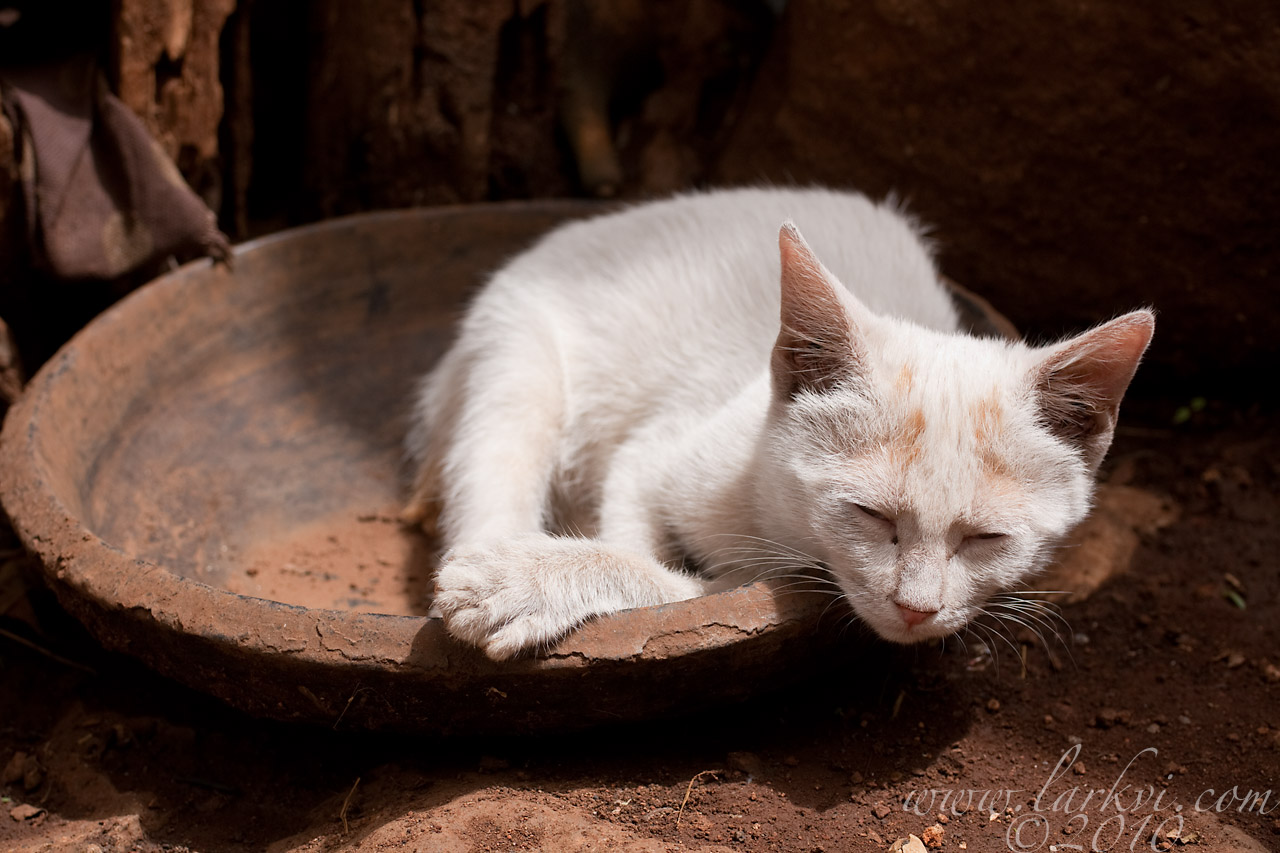 Cat #1, Zege Peninsula, Lake Tana, Ethiopia, 2009