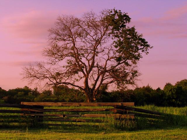 SRNB: Tree at McFadden Cemetery