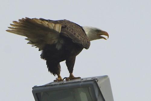 Giving me the eagle eye