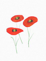 Poppies Sketch