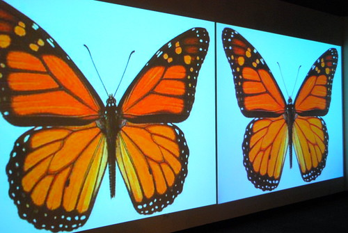 Sanctuary, monarchs, Peggy Notebaert Nature Museum
