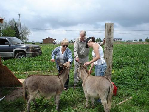 mamie_dale_donkeys