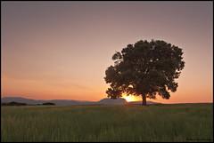 (Antonio Carrillo (Ancalop)) Tags: sunset sky espaa tree primavera canon landscape arbol atardecer spring spain paisaje tokina murcia filter cielo filtro cokin caravaca cokingnd8 ancalop