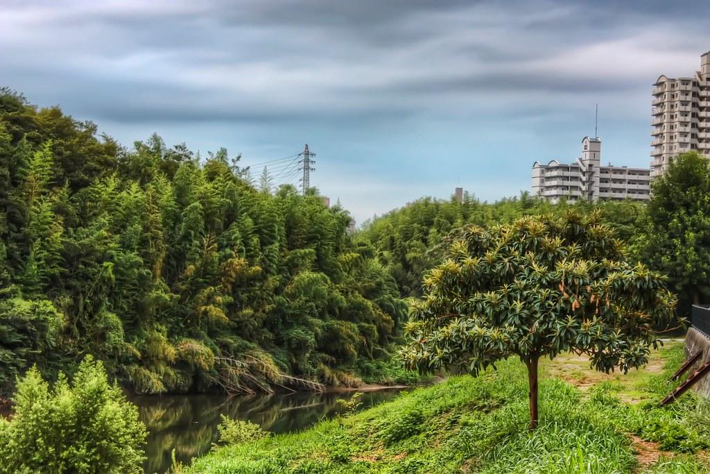 Japanese Neverland