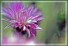 Hello... (sasithorn_s) Tags: friends flower macro nature thanks thailand bokeh bangkok golddragon flickrdiamond overtheexcellence theperfectphotographer mallmixstaraward hennysflowergardens