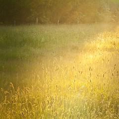 contre jour (david galliez) Tags: nature soleil nikon champs jour paysages contre bl d300 aberration abtphotos