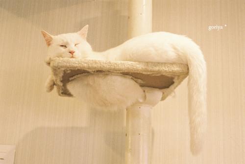 メタボ猫2