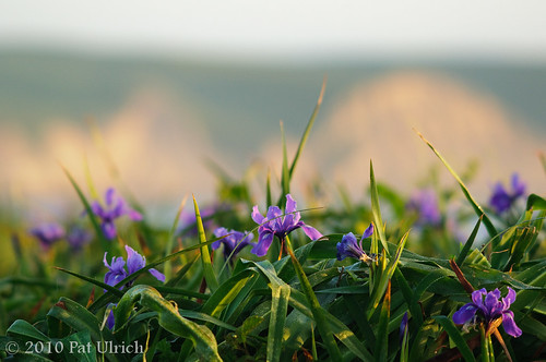 Irises and bluffs