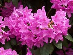 Flower (Rene's Files) Tags: bloemen universiteittwente