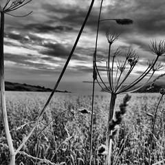 hedgerow (Nick J Stone) Tags: field fence cornwall line hedge