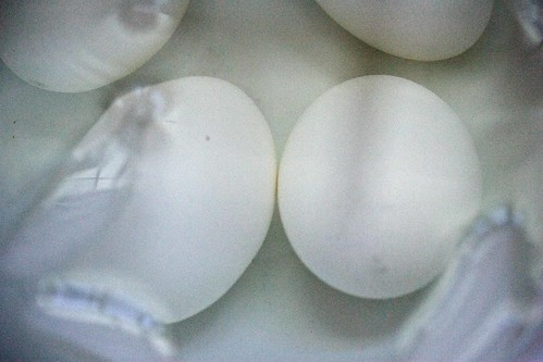 eggs in ice water