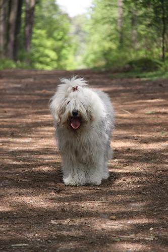 Hondenbos 29 mei