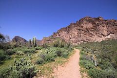 2010_03_26_1330 (BrainPie) Tags: arizona mountains nature fauna outdoors flora hiking trails az superstition lostgoldminetrail