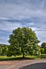 tree (Aidan Jones Photography) Tags: castle canon landscape eos scotland scenery aberdeen national trust hdr banchory crathes 50d crathescastle canoneos50d