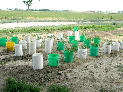 planting9