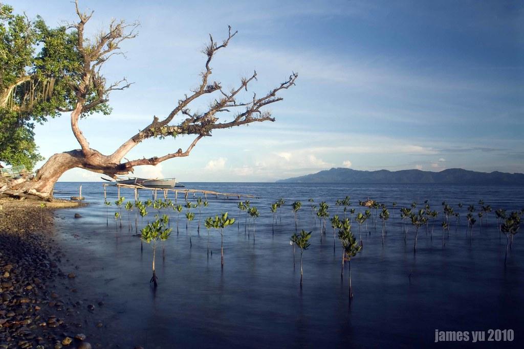 Mangrove Sanctuary