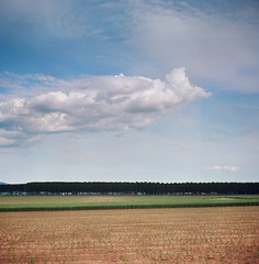Fields & clouds (Fabrizio Zago - Photography & media) Tags: trees tree 120 6x6 film nature field alberi analog mediumformat square countryside europa europe natural farm meadow meadows wiese natura 120film campagna piemonte squareformat scanned land campo fields analogue zeissikon albero landschaft piedmont baum kodakportra160vc folding hof analogica filmscan campi piemont analogico nettar fattoria scansione bumen mediumformatcamera medioformato foldingmediumformat filmscanned 51716 zeissikonnettar51716 tettineirotti mediumformatcameras nettar51716 foldingmediumformatcameras foldingmediumformatcamera scansionepellicola fabriziozago pellicola120 nettar517 dojrone