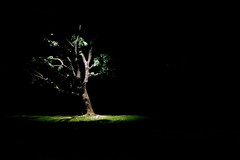 (bex finch) Tags: longexposure tree oak darkness nighttime
