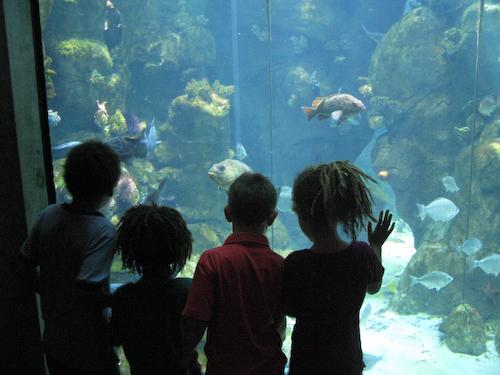 Aquarium gazers