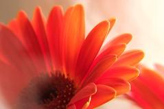 Flower in bright light (juhomattila) Tags: flower macro closeup tag3 taggedout tag2 tag1