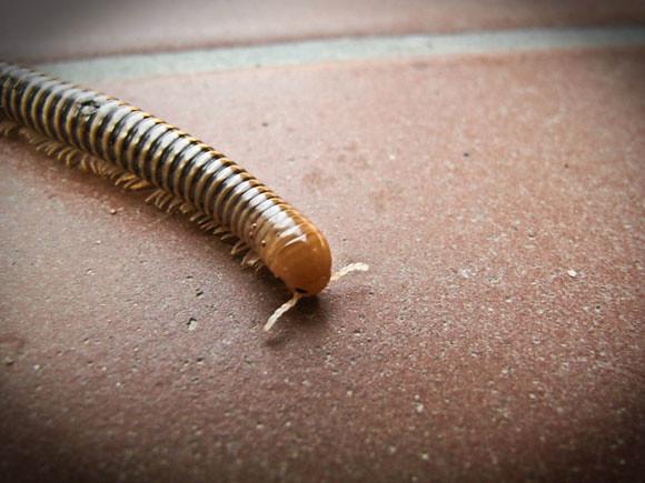 macro worm