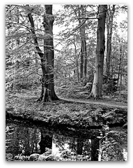 B&W Forest, Groningen / Drenthe ,the Netherlands, Europe (Aheroy(2Busy)) Tags: trees bw holland art netherlands dutch architecture forest landscape fun europe colours different arts nederland surreal hallucination groningen beautifull drenthe aheroy aheroyal beautifulgroningen