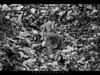 God created Man, Man created garbage (Shabbir Ferdous) Tags: white black female river garbage photographer shot explore littlegirl dhaka waste frontpage bangladesh bangladeshi buriganga ef70200mm28lisusm burigonga shabbirferdous canoneos1dmarkiv wwwshabbirferdouscom shabbirferdouscom