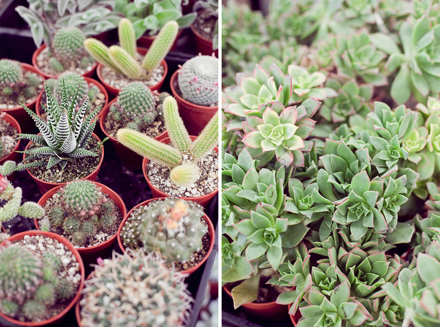 cactisucculents