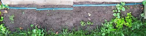 061610 garden progress