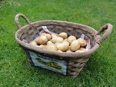 Aardappeloogst 2010 5434 gram van 10 poters