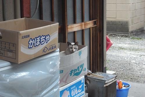Today's Cat@2010-06-20