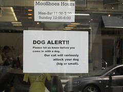 Shoe shop with cats