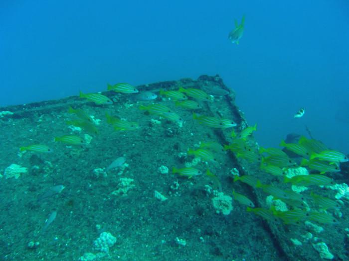 scuba diving oahu 030