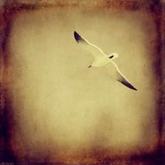 (Jon-F, themachine) Tags: usa galveston bird beach birds america canon texas tx seagull away powershot textured texan 2010  lonestarstate    sd1100  jonfu