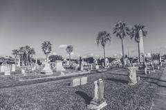 07022017_cemetery_07-2 (yosmama151) Tags: ppfanfavesfilmnoir cemetery coast galveston galvestonisland gravemarker graveyard gulfcoast gulfofmexico headstone oleandercemetery texas tomb tombstones vacation blackandwhite bw monochrome