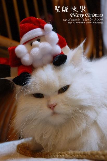 [叮叮]Cat。聖誕快樂Merry Christmas喵~