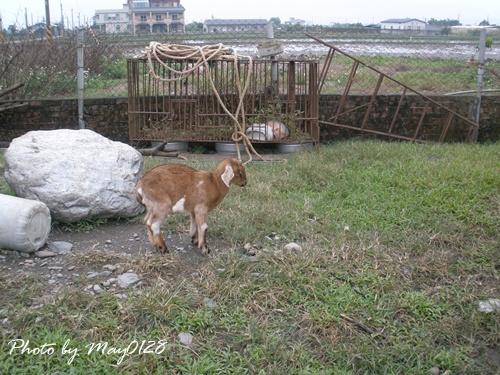 2009 12 20_6可達羊場.JPG