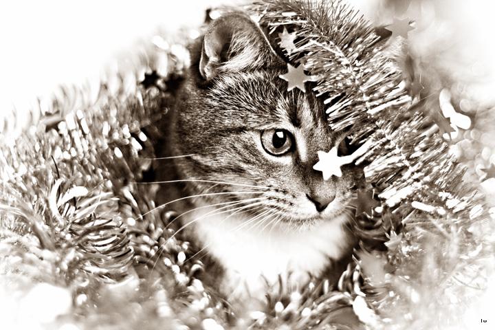 harmi firar jul!