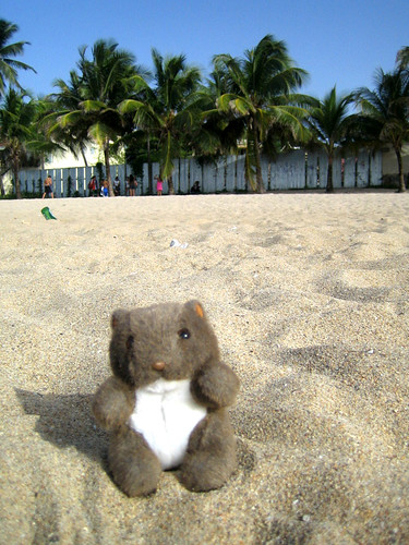 Mr Wombat on the Beach