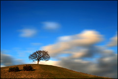 Burrow Hill (angus clyne) Tags: christmas winter england cloud tree apple clouds forest one moving oak bush ancient wind little cloudy path magic small hill fluffy fast windy cider somerset orchard trunk lone lonely mound magical lonetree gorse faster flikcr burrowhill kingsburyepiscopi leefilters