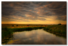 Summer In Cley (sidewinder54 (Closed For Business)) Tags: uk sunset england sky cloud colour nature water field grass clouds river landscape coast landscapes countryside cow interestingness interesting nikon colours cows norfolk july sunsets coastal rivers fields toned 2009 tone cley anawesomeshot colorphotoaward sidewinder54 add4579
